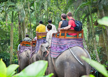 indonesia för bakasbali elefant safari Royaltyfria Foton