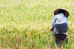 Indonesia, Java: Agricultura del arroz Foto de archivo