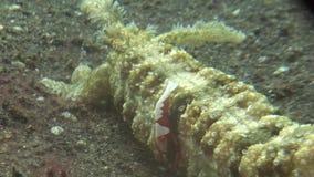 Indonesia lembeh strait scuba diving underwater stock video