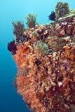 Indonesia Lembeh Straits Sulawesi Stock Images