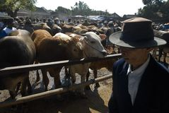 INDONESIA LIMITS AUSTRALIAN CATTLE IMPORT Stock Photos