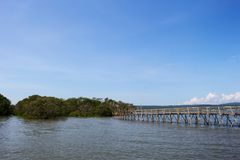 Indonesia Mangrove. Bamboo Bridge go in the Mangrove Trees in Day of Blue Sky Royalty Free Stock Photos