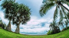 Indonesia Palm Tree Ocean View Timelapse 4k. Timelapse of a ocean view, between palm trees stock footage