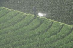 INDONESIA RICE PRODUCTION NEW TARGET Royalty Free Stock Image