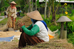 Indonesia, Rice-workers Royalty Free Stock Photography