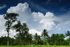 Indonesia - rural landscape Stock Photos