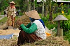 indonesia ryż pracownicy fotografia royalty free