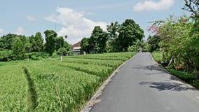 Indonesia Street View Rice Fields 4k stock footage