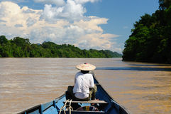 Indonesia - Tropical jungle on the river, Borneo Stock Images