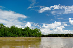Indonesia - Tropical jungle on the river, Borneo Royalty Free Stock Photo