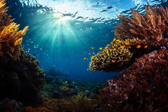 Indonesia. Underwater shot of the vivid coral reef in tropical sea. Bali Barat National Park, Indonesia Royalty Free Stock Photo