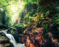 Indonesia wild jungles mystery landscape. Indonesia wild jungles. Amazing mystery rainforest landscape with small waterfall flowing among tropical plants Stock Images