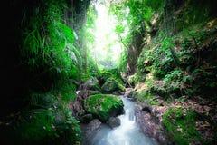 Indonesia wild jungles mystery landscape stock image
