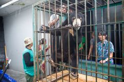 INDONESIAN BEAR RESCUE Stock Photography
