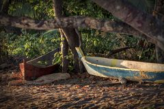 Indonesian canoes. Traditional Indonesian canoe on the coast of the city of Mumere, Indonesia royalty free stock photography