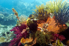 Indonesian coral reef Royalty Free Stock Image
