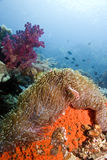 Indonesian coral reef Stock Photos