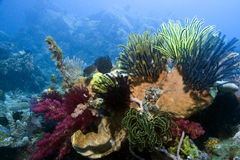 Indonesian coral reef Royalty Free Stock Photos