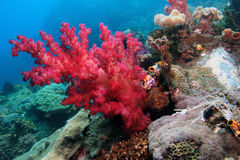 Indonesian coral reef Stock Photo