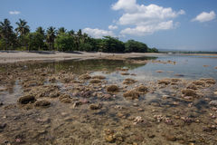 Indonesian Coral Reef at Low Tide Stock Images