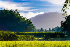 Indonesian farm field in sunny day Stock Photography