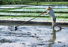 Indonesian Farmer. Prepares a rice paddy for another crop royalty free stock image