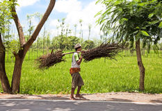 Indonesian farmer carrying dry branches Royalty Free Stock Photo
