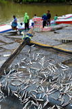 Indonesian Fishermen Drying Fishes Stock Photography
