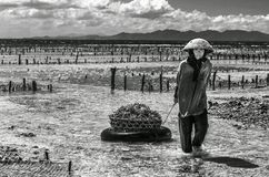Indonesian lady farmer carrying collected seaweeds in a basket from sea to her house for drying, Nusa Penida, Indonesia Stock Photo
