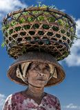 Indonesian lady farmer carrying collected seaweeds on her head from sea to her house for drying, Nusa Penida, Indonesia Stock Photos