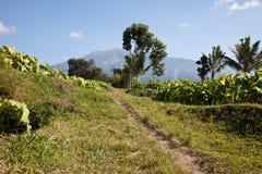 Indonesian landscape. Beautiful landscape of the area of tetebatu in Indonesia Stock Photo