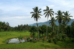 Indonesian landscape Stock Images
