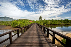 Indonesian landscape with mangrove and walkway Royalty Free Stock Images