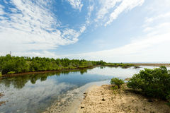 Indonesian landscape with mangrove and walkway Stock Image