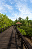 Indonesian landscape with mangrove and walkway Stock Images