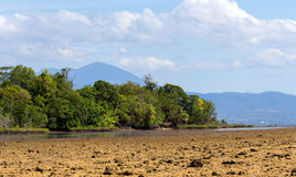 Indonesian landscape with mangrove and walkway Royalty Free Stock Image