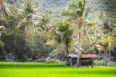 Indonesian local hut rice fields jungles Royalty Free Stock Images