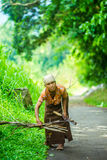Indonesian old woman looking for dried wood for cooking. Indonesian old woman looking for dried wood. She will use it to cook her food. She live alone in her stock photos