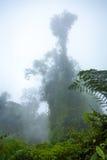 Indonesian rainforest Stock Photos