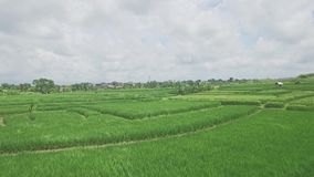 Indonesian Rice Fields Aerial 4k. 4k aerial footage of a rice field on Bali, Indonesia stock footage