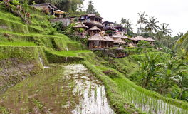 Indonesian rural village Royalty Free Stock Image