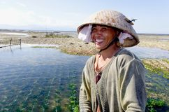 Indonesian seaweed worker. Indonesian  seaweed worker in nusa lembongan Stock Photography