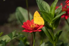 Butterfly collect nectar. In indonesian this spring season, and many flower stock photos