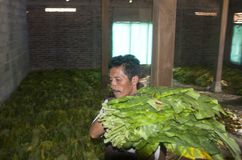 INDONESIAN TOBACCO INDUSTRY Stock Photo