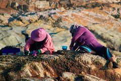 Indonesian women sort the fishing catch by sitting on a rock by the sea in the evening. Concept of aboriginal life. Indonesian women sort the fishing catch by royalty free stock image