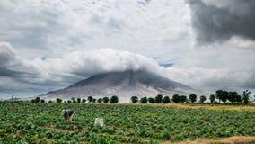 Indonesian women working under Sinabung volcano stock photos