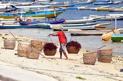 Indonesian worker at seaweeds harvest. Indonesian worker carrying seaweeds in baskets in nusa lembongan Royalty Free Stock Photos