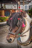 Indonesian working horse Royalty Free Stock Images