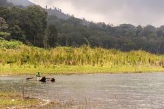 Indonesien Bali 10 10 lokalt folk 2015 för kanufartyg på djungeln vid sjön Tamblingan Arkivfoto