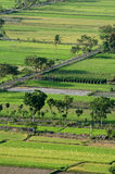 Indonesien Ricefield Lizenzfreies Stockfoto